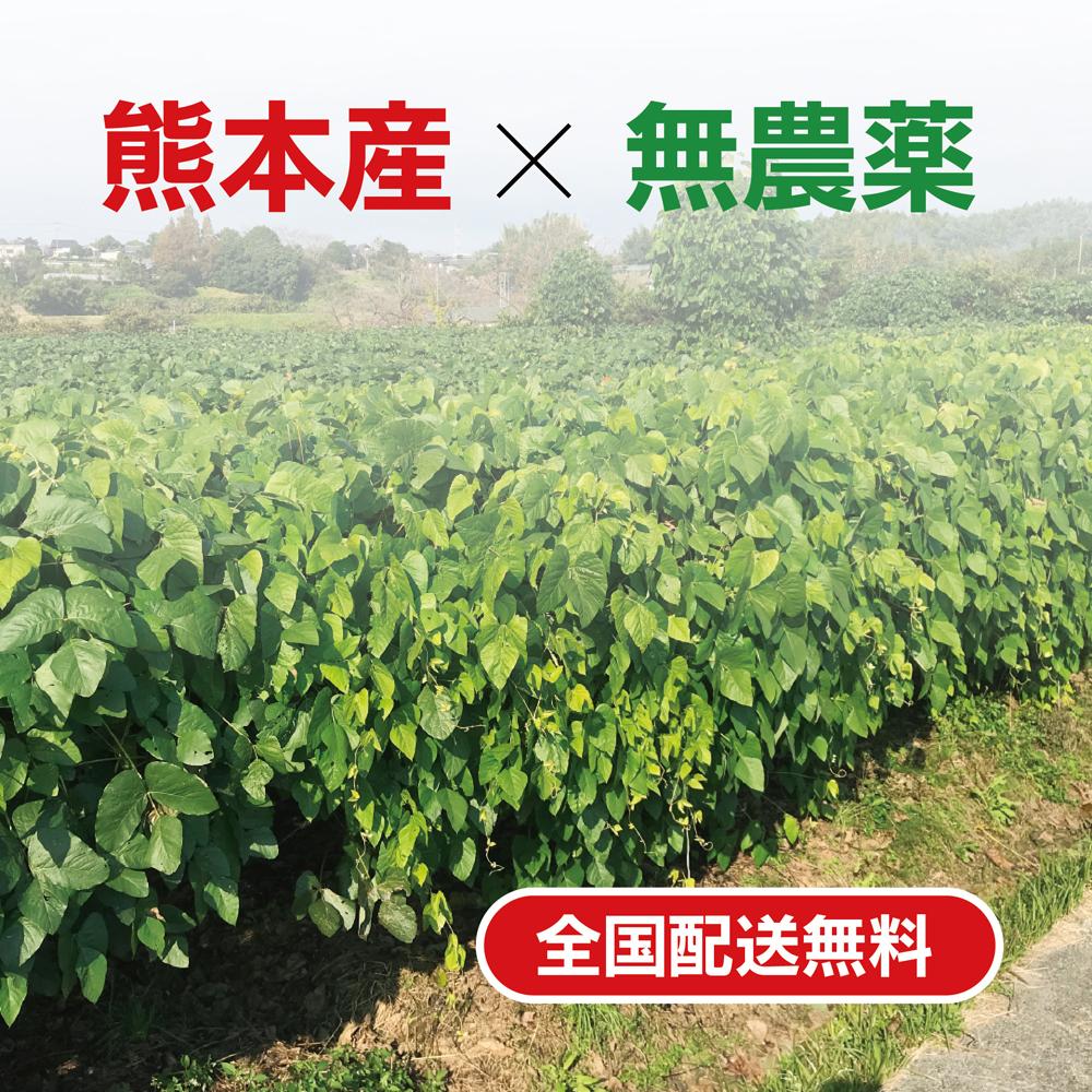 ムクナ豆(八升豆) パウダー(お試用50g入)