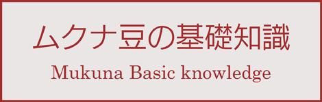 ムクナ豆の基礎知識